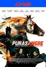 Purasangre (2016) CAM