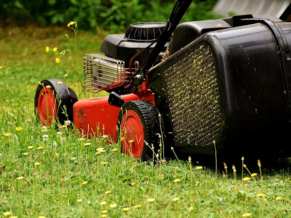 Lawn Maintenance 101: Everything You Need to Know