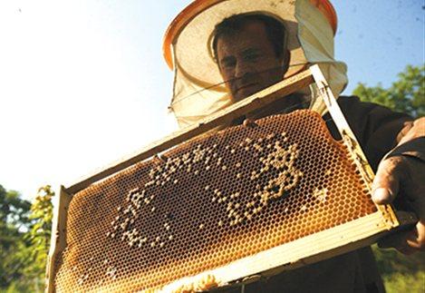 Νέες επιδοτήσεις μελισσοκομίας 2016: Βγήκαν τα χρήματα που θα δώσουν στους μελισσοκόμους...