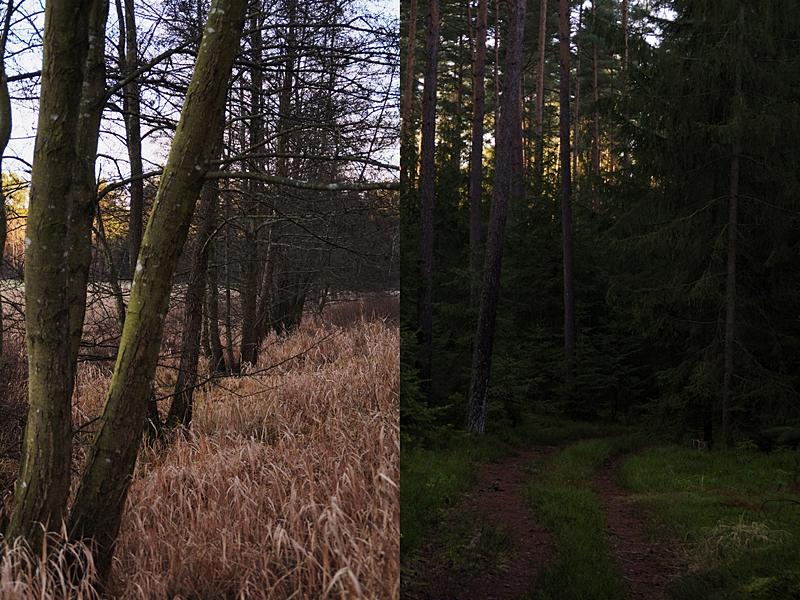 Waldspaziergang im Winter