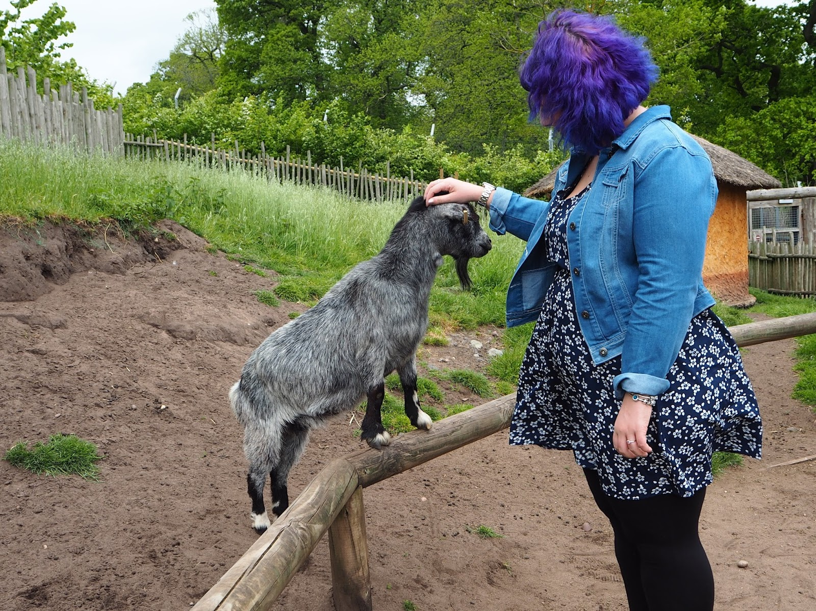 west midland safari park goat