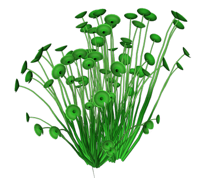 Sea plants png
