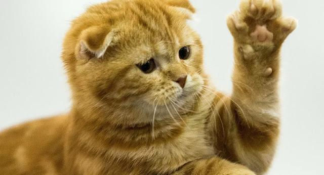 قطة تدخل مع سيدة لمتجر وتشير لطعامها المفضل من أجل شرائه