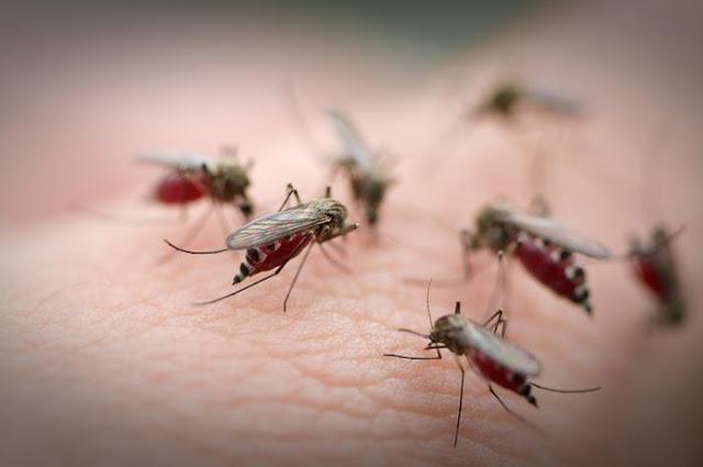 Cara Ampuh Mengusir Nyamuk Secara Alami Agar Tak Datang Lagi