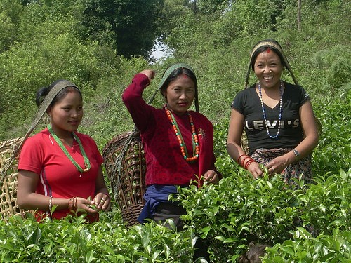Tea Board push for quality check of Nepal brew