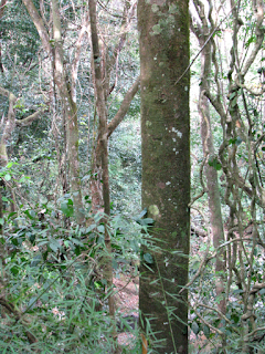 Forest in Puriscal