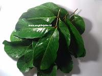Cara menghilangkan uban dengan daun rambutan secara alami