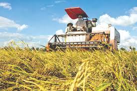 Xuất khẩu gạo của Việt Nam đã có một dấu hiệu tốt