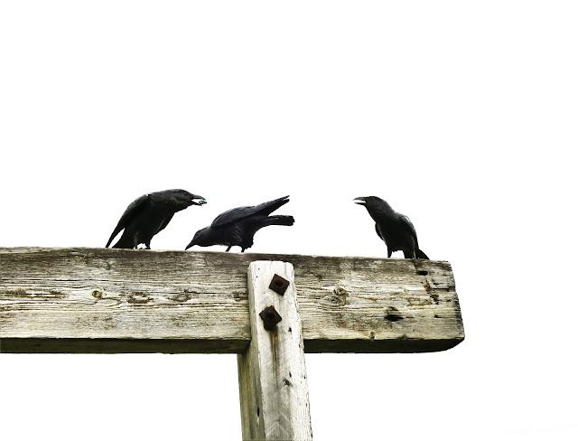 Ravens. Benson Sculpture Garden, Colorado. May 2016.