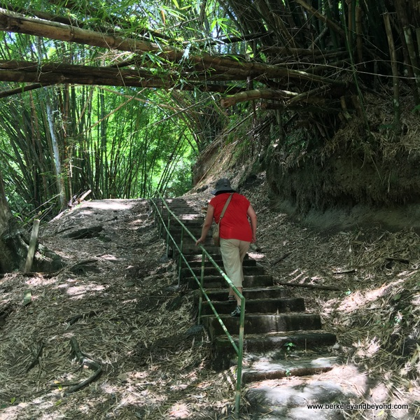 stairway on trail to Argyle Waterfall in Rosborough, Tobago