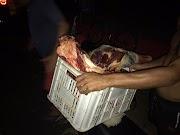 População leva carne de vaca atropelada por ambulância em Pedreiras