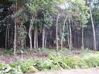 posisi lokasi lahan pembangunan taman baca baraoi