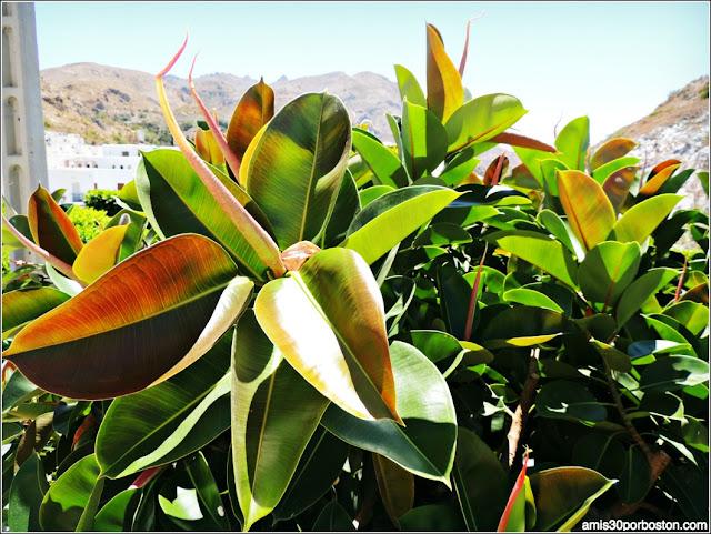 Plantas Almerienses