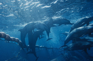 dolphins, fishing net, dolphins fishing net
