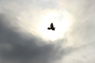 A bird flying in a cloudy sky