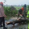 Pohon Tumbang Picu Kemacetan, Tim SAR Batalyon C Pelopor dan BPBD Bone Diterjunkan