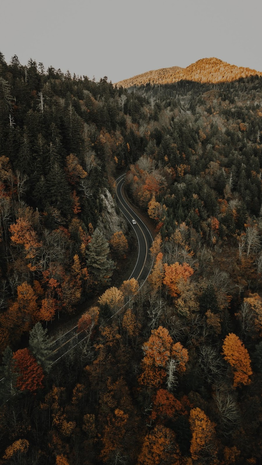 Forest road aerial view mobile wallpaper