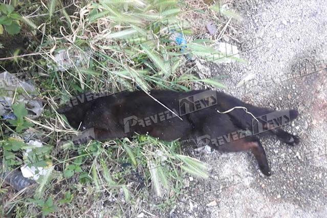 Μια αποτρόπαια και απάνθρωπη εικόνα αντίκρισαν σήμερα το πρωί κάτοικοι στο χωριό Θέμελο Πρέβεζας.