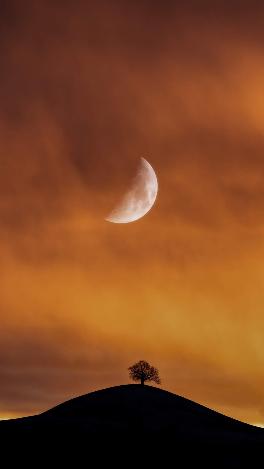 Lonely tree under half moon