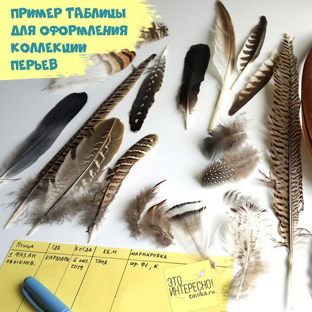 как оформлять коллекцию перьев птиц