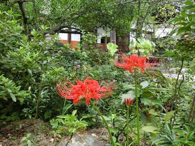 光則寺のヒガンバナ