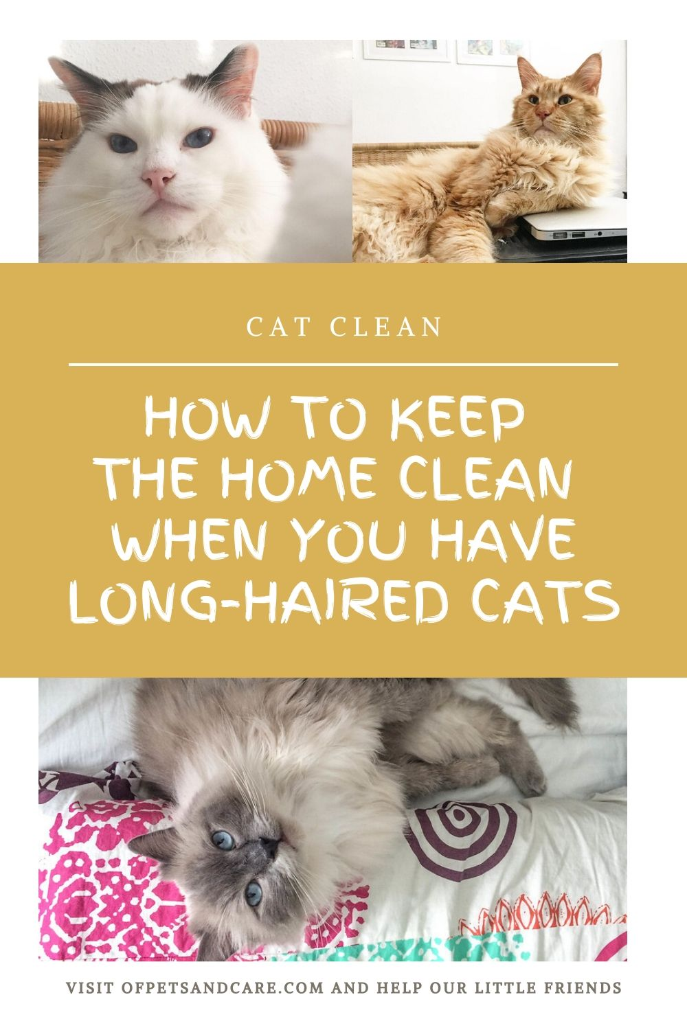 Having cats at home is relaxing and fun...but, it can also be tiresome. That is when you have long-haired cats shedding their fur all day long. As a pet owner and homemaker, one has to see to it that the cats are happy and the home is well-maintained.