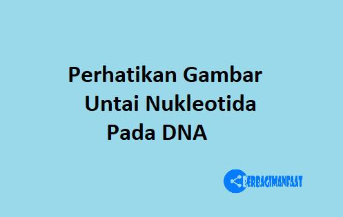 PERHATIKAN GAMBAR UNTAI NUKLEOTIDA PADA DNA BERIKUT