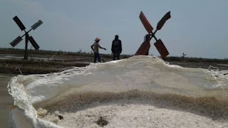 Musim Panen, Harga Garam Di Kab Cirebon Terjun Bebas