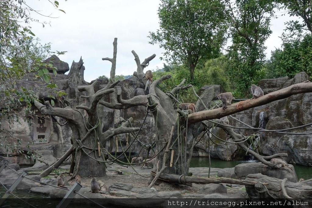 台北動物園(9).jpg