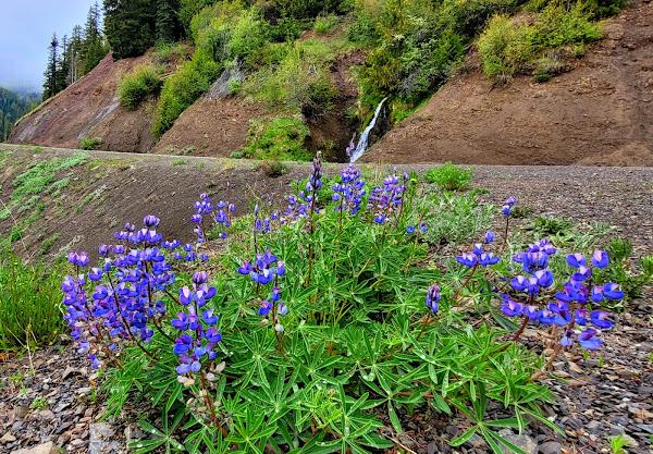 Wildflowers, waterfalls, and the road to Hurricane Ridge
