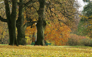 http://fotobabij.blogspot.com/2015/12/trzy-stare-drzewa.html