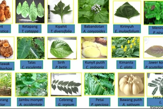 Herbal Medicine-Standard or Pharmacy, Know Together