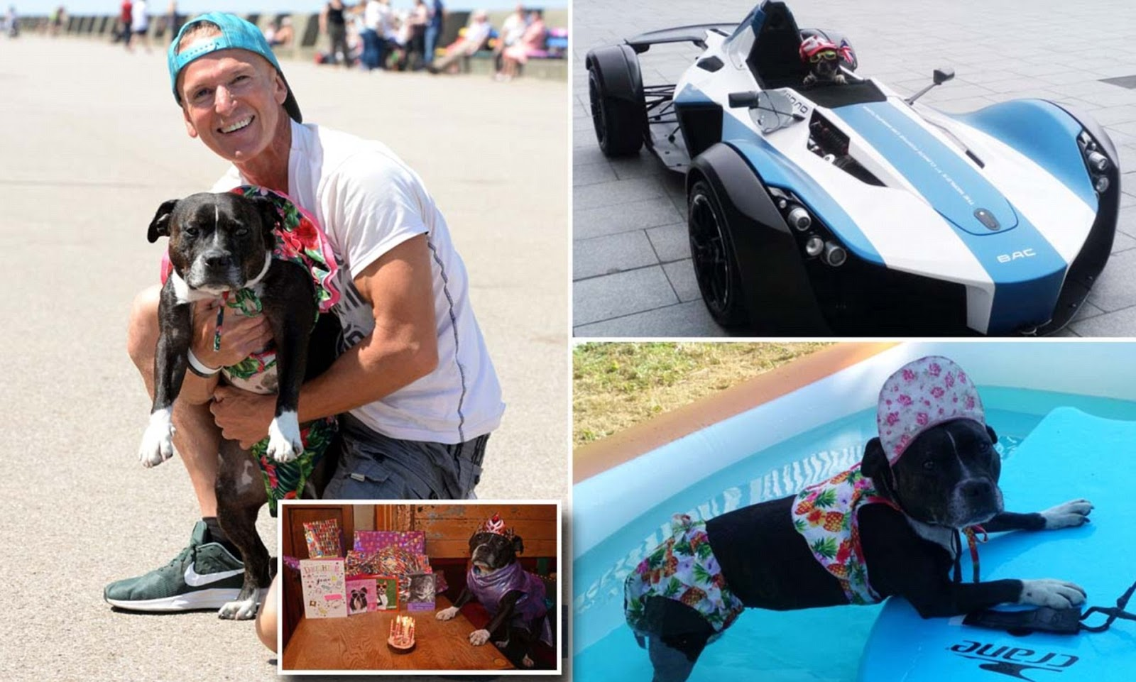 Princess Cleopatra The Most Pampered Dog Who Owns Three Cars And Her