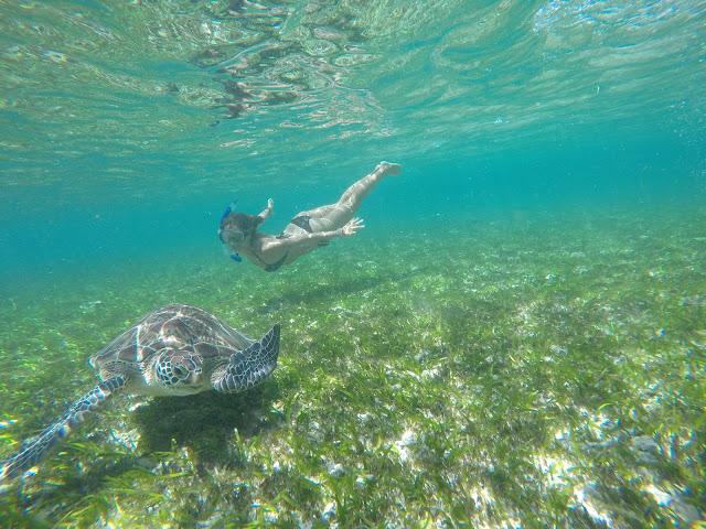 indonesia tortugas
