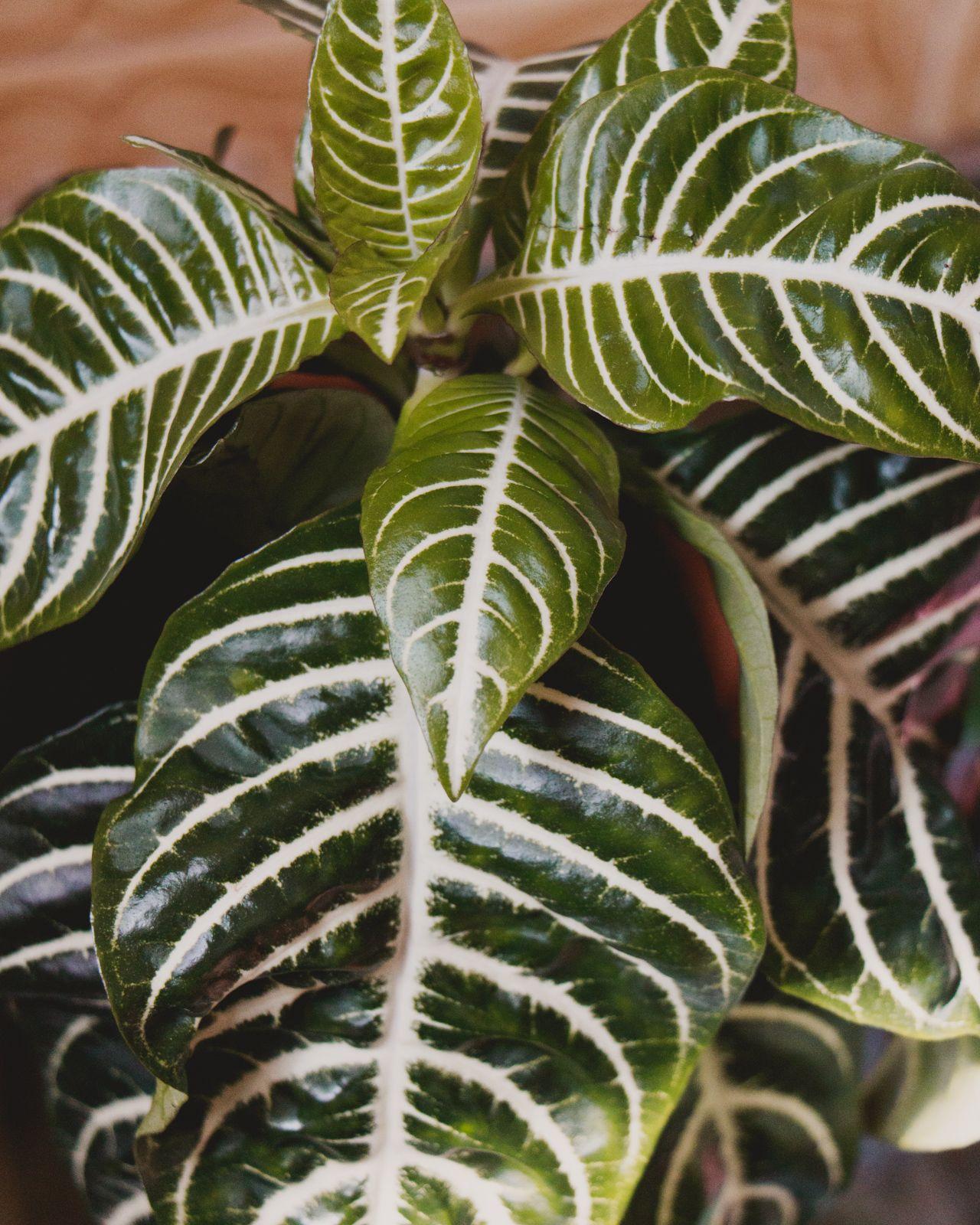 plantas verdes Sexta-feira santa e páscoa | RESUMINHO