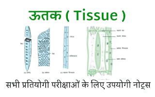 Utak ( Tissue ) biology notes in hindi.png