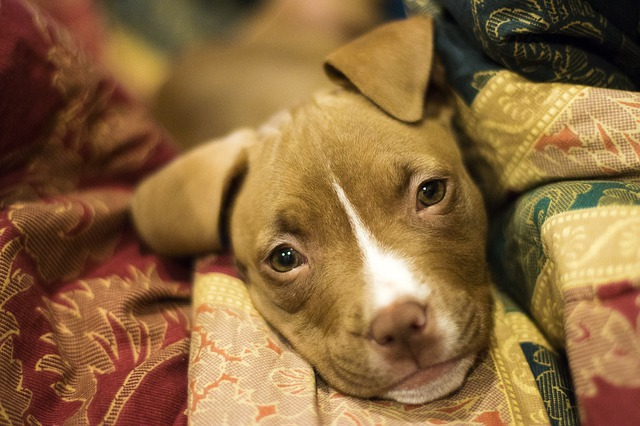 5 Facts Of Pit Bull Puppys