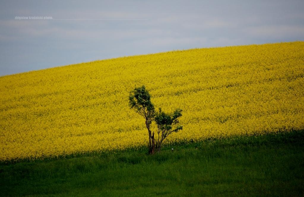 Warmia naturalna, warmińskie łąki