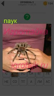 в руках человек держит обычного паука 3 уровень 400+ слов 2