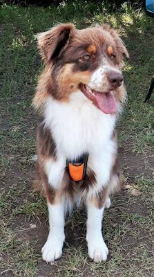 education chiens annecy haute-savoie faverges thones ugine albertville