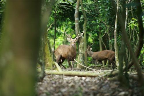 thăm rừng nguyên sinh Bằng Tạ