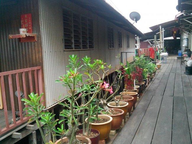 глиняные горшки с цветами