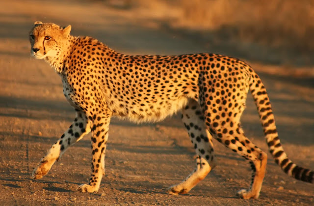 أغرب 6 حقائق مفاجئة حول قلب الحيوانات