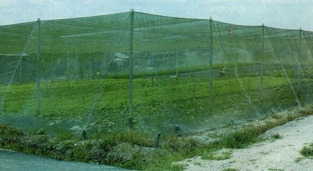 Budidaya Sayuran Dengan Metode Greenhouse