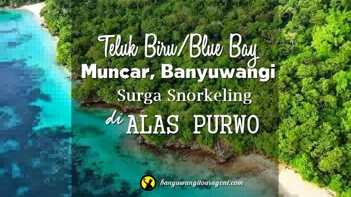 Teluk Biru Muncar Banyuwangi | Banyuwangi Tour Agent