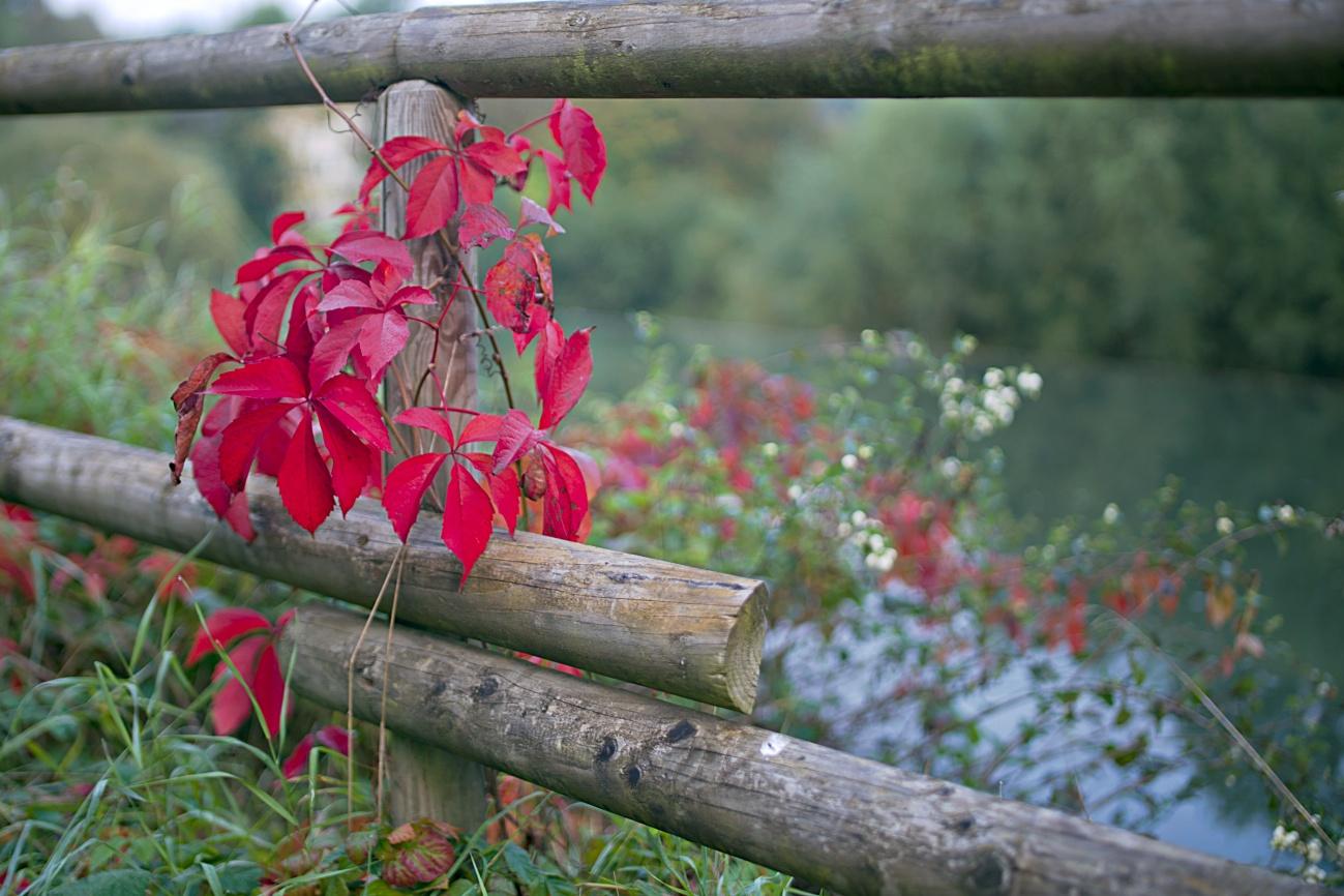 Bild des Tages #145 — Herbstliches