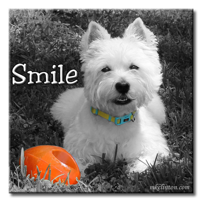 "Happy B & W Westie meme with the word ""Smile"""