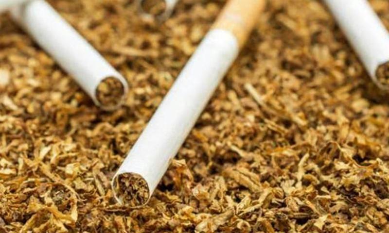 'Sarma tütün daha az zararlı' düşüncesi yanlış!