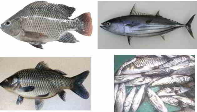 Ikan Konsumsi yang Paling Laris