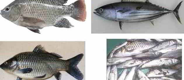 Ikan Konsumsi yang Paling Laris? Berikut Nama dan Gambarnya